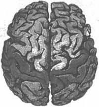 Мозг рассказывает. Что делает нас людьми