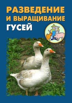 Разведение и выращивание гусей
