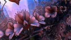 Цветы с Локиузы