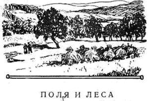 Поля и леса
