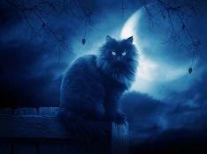 Найди меня в темноте