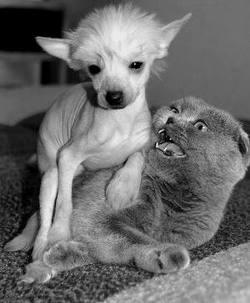 Собачка и пол котика