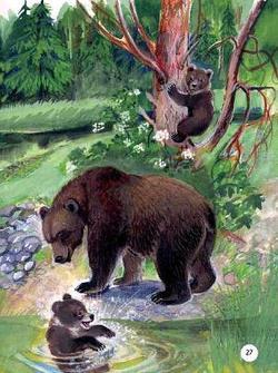 Купание медвежат