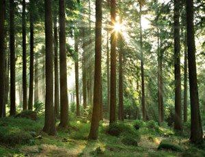 Атмосфера леса