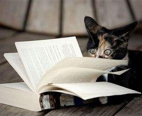 Книги о котах и кошках